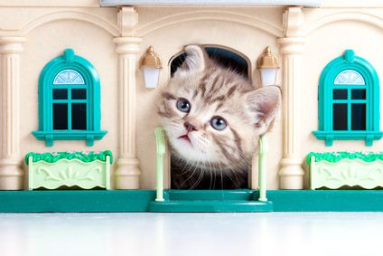 Indoor cat in a toy House