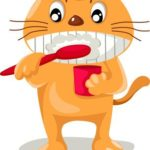 How to brush a cat's teeth and how to get your cat to accept it