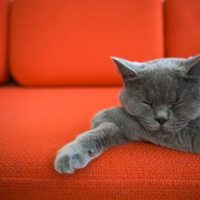11 tips to get a lazy cat to play