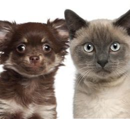 Why Are There Fewer Cat Breeds Than Dog Breeds?