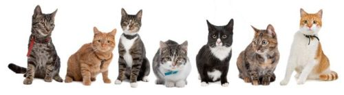 Group of several cat breeds