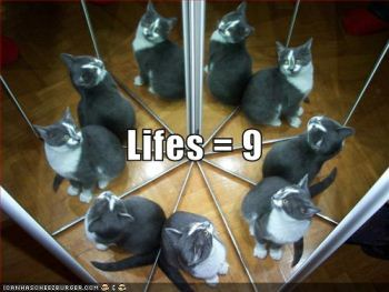 Cat with nine lives