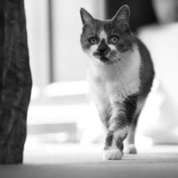 Cat roams in street away from home