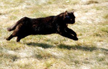 Fast running cat