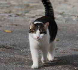 How far do cats roam?