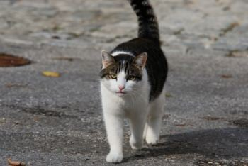 How far do cats roam?