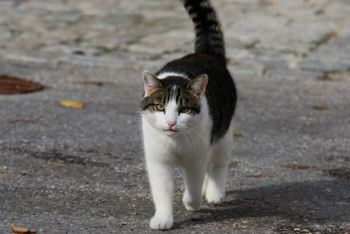 Male cat roaming