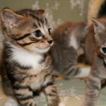 Should I Get a Male or a Female Kitten As a Companion to My Resident Cat?