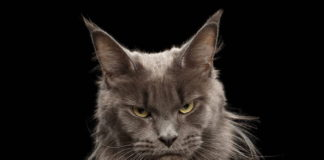 cat aggressive behavior