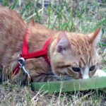 Isn't it dumb to walk a cat on a leash?