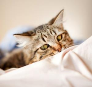 Is your cat waking you up at night?