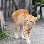 Expected changes in cat behavior after spaying or neutering