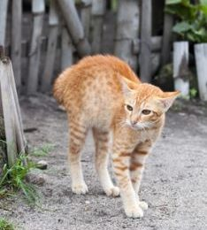 Reduced aggression is on example of changes in cat behavior after spaying or neutering