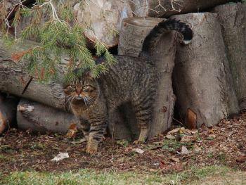 A male cat spraying urine