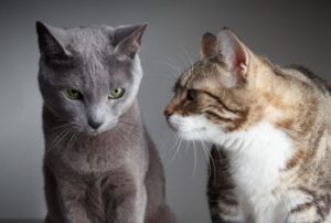 What are behavioral differences between male and female cats?
