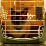 Why your cat hates his pet carrier?