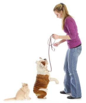 Dog and cat walking on leash