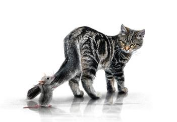 If a cat was well fed by humans, would it mean he'd leave a mouse alone?