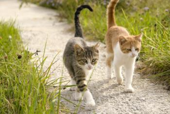 Two kittens walking together