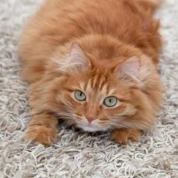 Is your cat clawing the carpet?