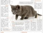 Stuff that makes your cat a perfect hunter - an infographic