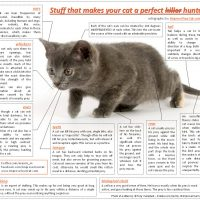Stuff that makes your cat a perfect hunter – an infographic