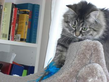 cat playing with a feather toy on a cat tree