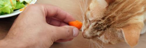 Even if a cat is fed vegetarian diet, it's hard to evaluate it's effect on health.