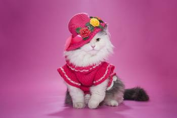 You will know your cat is in heat, if she dresses up like this...