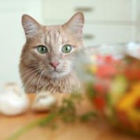 Can a cat become vegetarian?