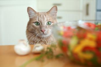 Do you think vegetarian diet is appropriate for cats?