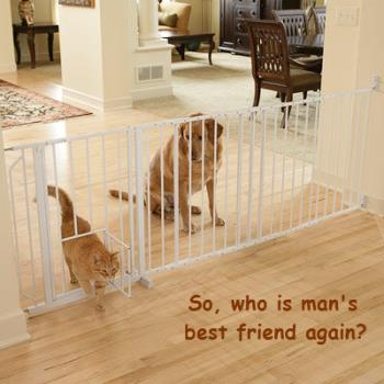 Pet gate - a good way to keep dog out of cat food