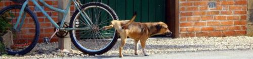 Dog peeing on a bicycle wheel.