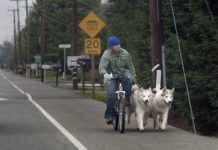 a man bikes with two dogs