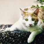 Stress in cats. Causes, symptoms and treatments of anxiety and stress in cats