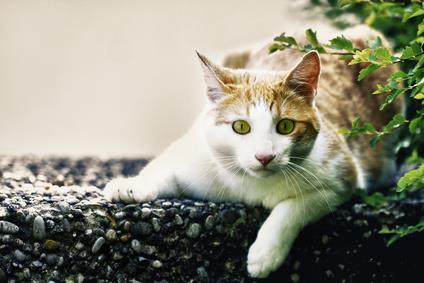 Alerted, nervous cat