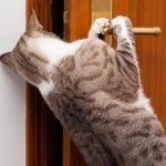 How to stop a cat from scratching bedroom door at night
