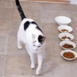 Top reasons why your cat is not eating