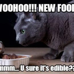 Are you sure it's edible. Switching cat food meme