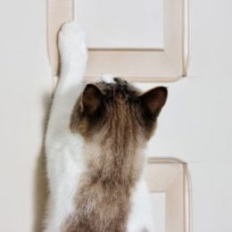 cat scratching at door