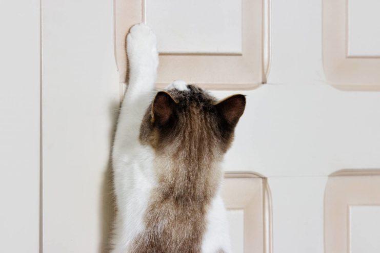 cat scratching at door