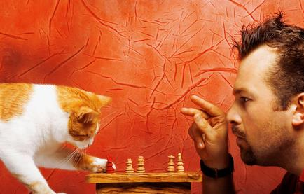 Can you play chess with your cat? Or are there better ways to keep your indoor cat active?