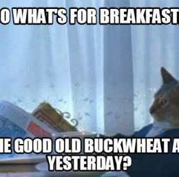 cat eating the same food every day...