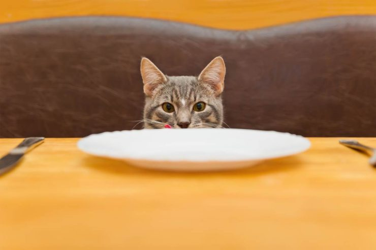 cat waiting for dinned according to his schedule
