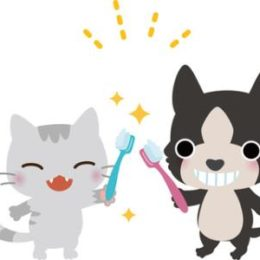 Dog tooth brushing, cat tooth brushing
