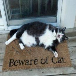 Beware of obese cat