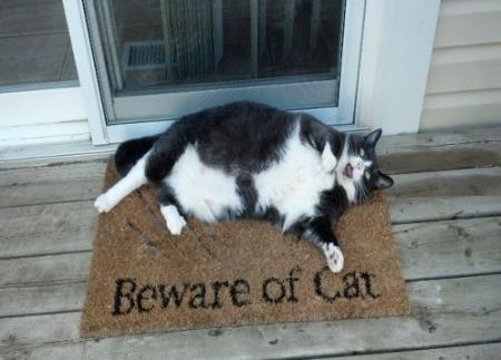 Beware of obese cat