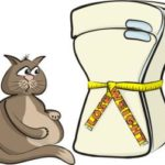 Nine tips to help your cat lose weight more easily