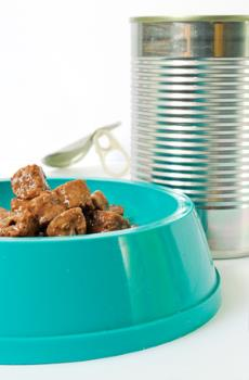Canned cat food in bowl