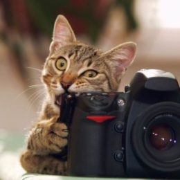 Cat playfully bites a photo camera
